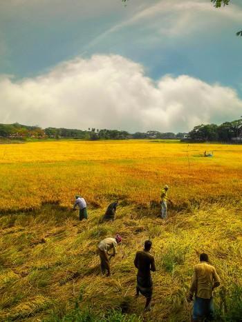 Farmers' Harvest-Landscape-1008 - Photography | ЯΔjjiБ ĦΔssΔИ | Touchtalent