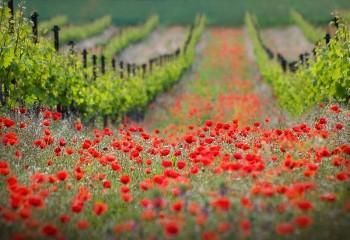 Flower Fields 1 - Photography | Mysecret Gardenmdp | Touchtalent