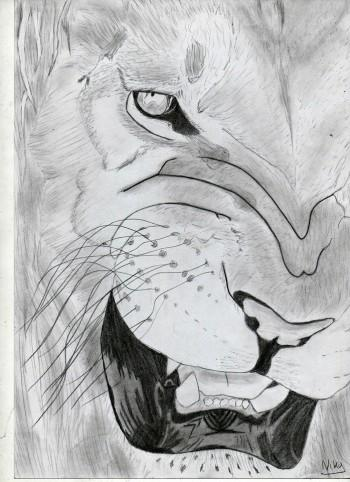 KinG - Sketching | Kourosh Niky | Touchtalent