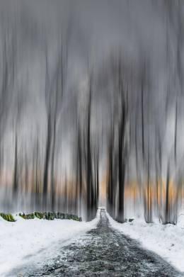 Skogen* - Photography | Sri Harsha | Touchtalent