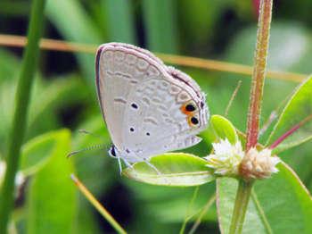 Small Butterfly - Photography | Sumana Dutta | Touchtalent