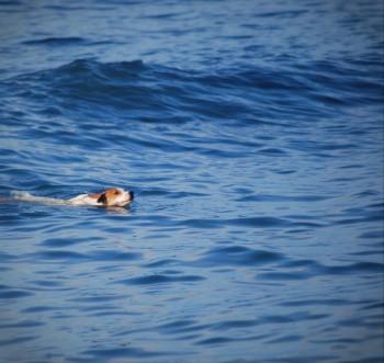 Surf Dog - Photography | Ivor Tabasan | Touchtalent