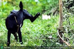 Tripod - Photography | Bobbirio (studio 8 Photography) | Touchtalent