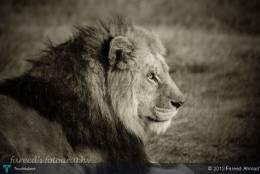 Wildlife - Photography | Fareed Ahmad | Touchtalent