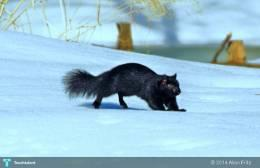 Winter Wildlife... - Photography | Allan Fritz | Touchtalent