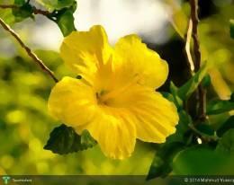 Yellow Hibiscus - Digital Art | Mahmud Yussop | Touchtalent